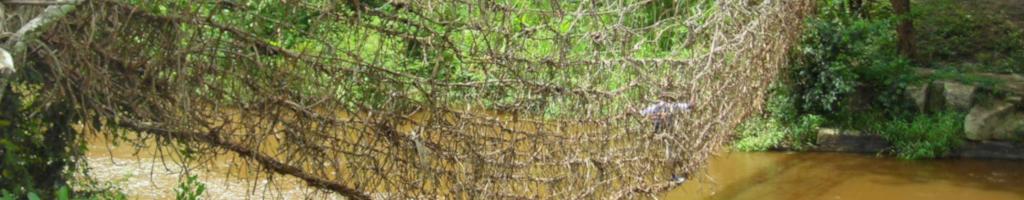 Природные решенияКак избежать захвата земель во имя сохранения биоразнообразия?